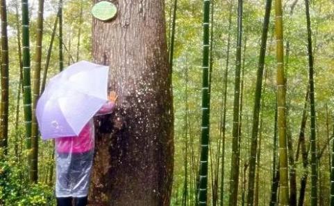 走进大自然——探究大树的生长奥秘